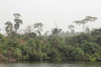 article-ivoire-183-2
