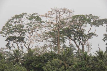 article-ivoire-188-2